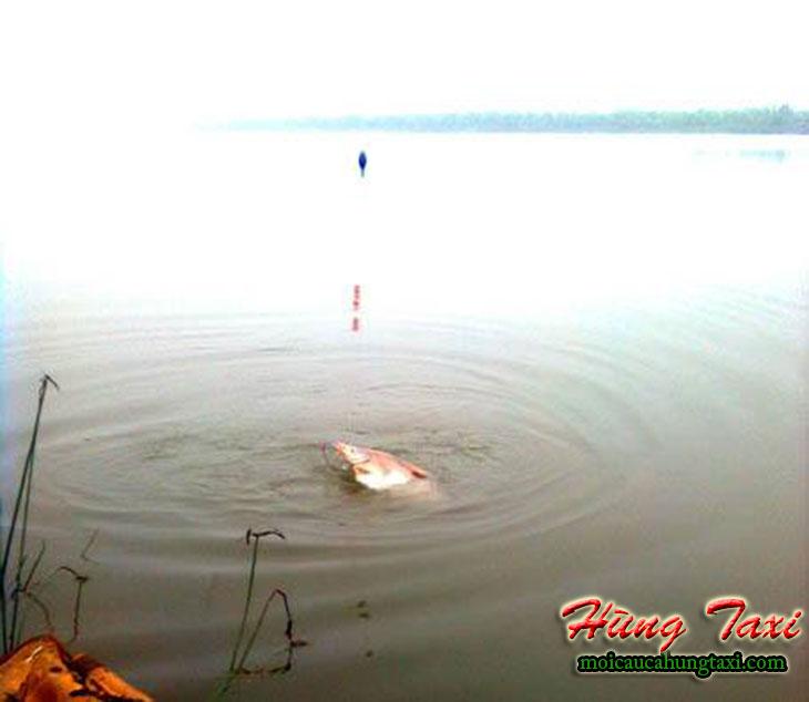 mồi câu cá ngạnh sông hùng taxi