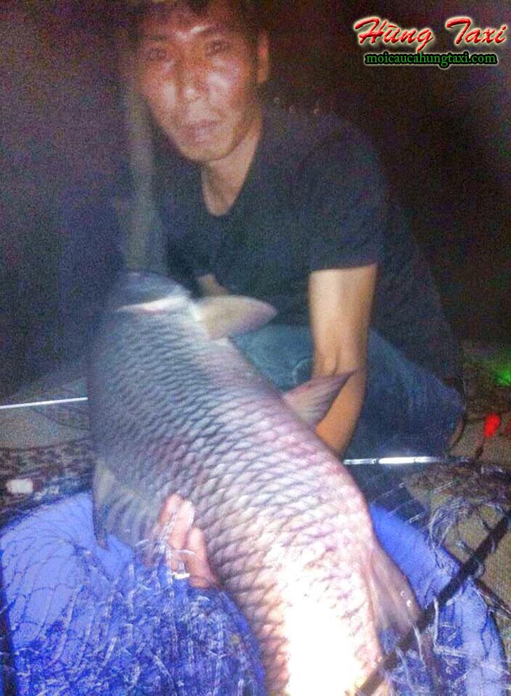 Mồi câu cá trôi của hùng taxi câu cá trôi 11.05kg hồ tứ hải