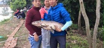 Hồ câu cá Phương Tâm lạc thị hà nội
