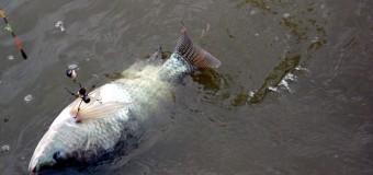 hồ câu cá ông ngọ thôn vạn phúc thanh trì