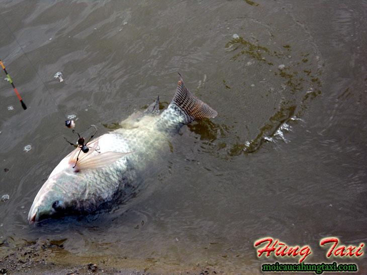 Cá ở hồ câu ông ngọ