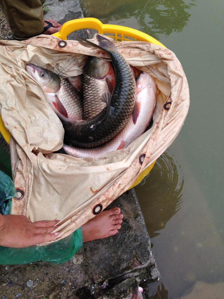 Hồ hương thắng thả cá 18.8.2016