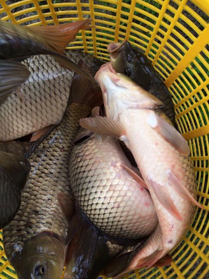 Mồi câu cá dành cho dân câu lục cơ bản